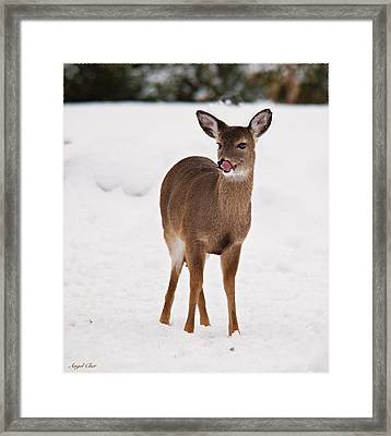Framed Print featuring the photograph Little One by Angel Cher