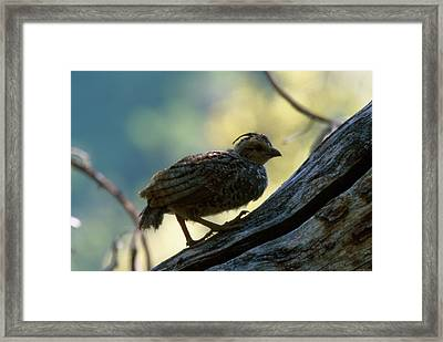Little One - Ventana Wilderness Framed Print by Soli Deo Gloria Wilderness And Wildlife Photography