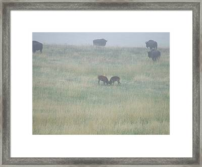 Little Ones At Play Framed Print by Dennis Wilkins