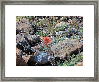 Little Orange Wild Flower Framed Print by Debbie Wells