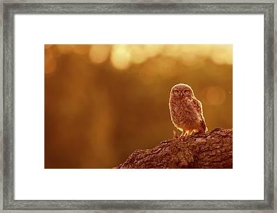 Little Owl In Red Framed Print by Roeselien Raimond