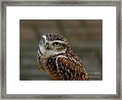 Little Owl Framed Print by Louise Fahy