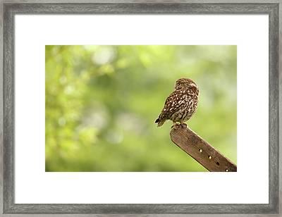Little Owl Framed Print by Roeselien Raimond