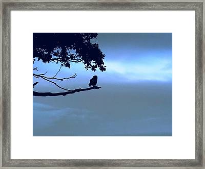 Little Owl Watching Framed Print