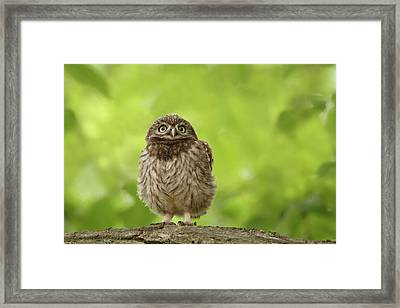 Little Owlet Framed Print by Roeselien Raimond