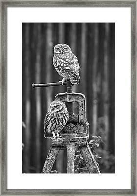 Little Owls Black And White Framed Print