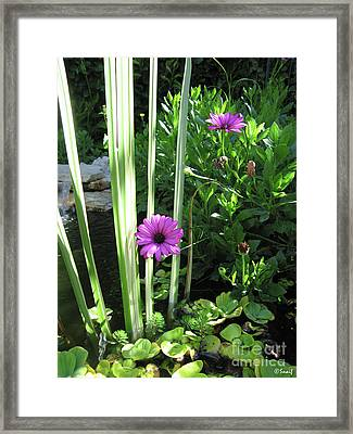 Little Paradise Framed Print by Ilaria Andreucci
