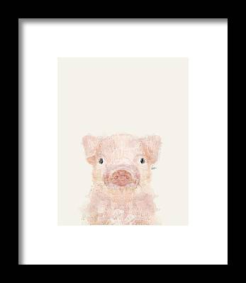 Baby Pigs Framed Prints