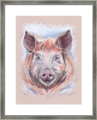 Little Pig Framed Print