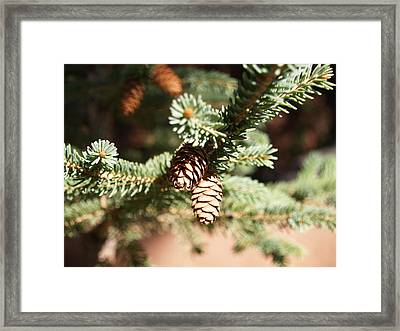 Little Pine Cones Framed Print by James Granberry