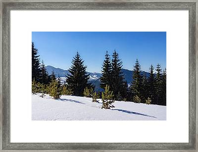 Little Pine Forest - Impressions Of Mountains Framed Print