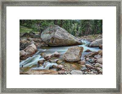 Framed Print featuring the photograph Little Pine Tree Stream View by James BO Insogna