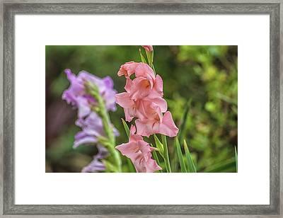 Little Pink Flower Framed Print