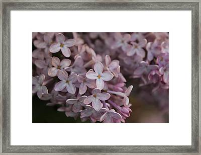 Little Pink Stars Framed Print