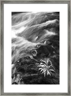 Little Plant II Framed Print