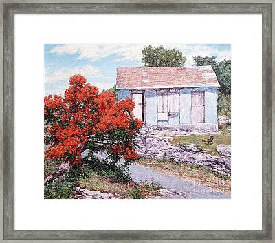 Little Poinciana Framed Print