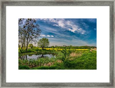 Little Pond Near A Rapeseed Field Framed Print