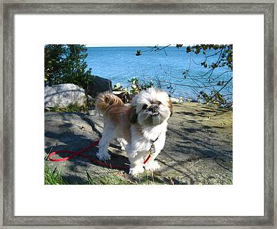 Little Poser Framed Print