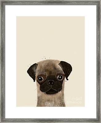 Framed Print featuring the photograph Little Pug by Bri B