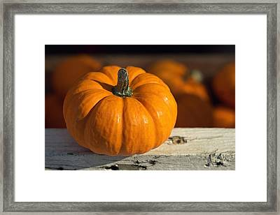 Little Pumpkin Framed Print by Joseph Skompski