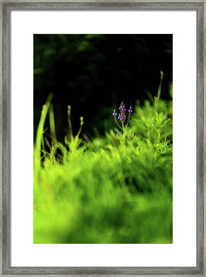 Framed Print featuring the photograph Little Purple Flower by Onyonet  Photo Studios