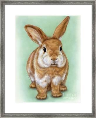 Little Rabbit 1 Framed Print