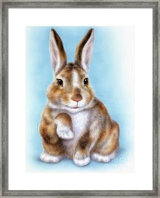 Little Rabbit 2 Framed Print
