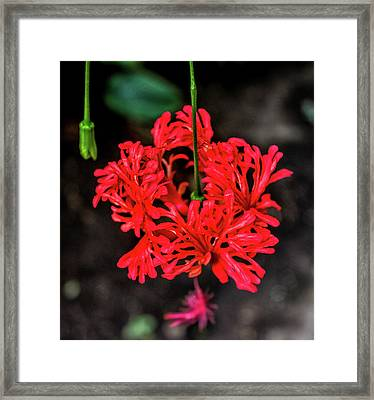 Little Red Flower Framed Print by Martin Newman