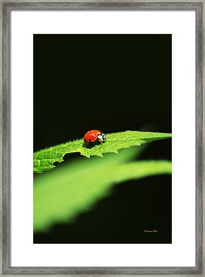Little Red Ladybug On Green Leaf Framed Print