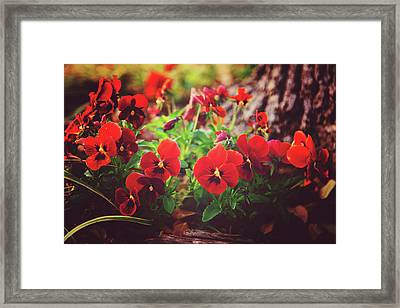 Framed Print featuring the photograph Little Red Pansies by Toni Hopper