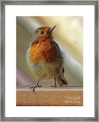 Little Robin Redbreast Framed Print