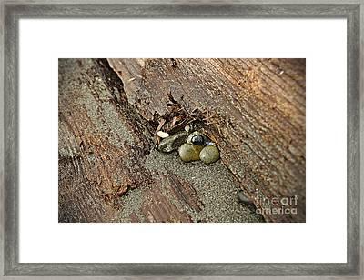Little Rocks Framed Print