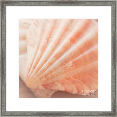 Little Seashell Framed Print
