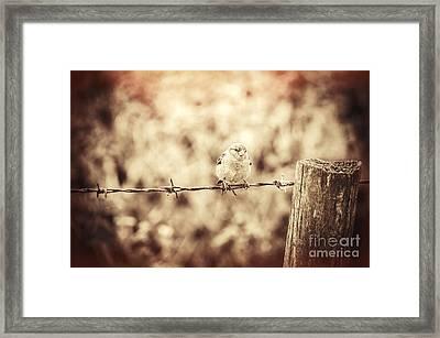 Little Sparrow Framed Print