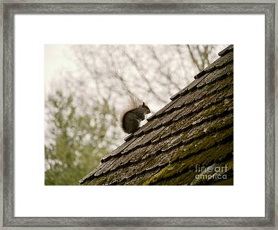 Little Squirrel On A Rooftop Framed Print