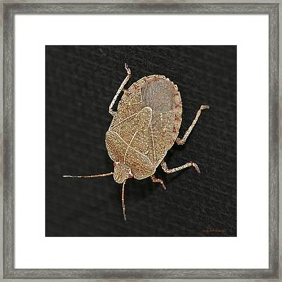Little Stinker Framed Print by DigiArt Diaries by Vicky B Fuller