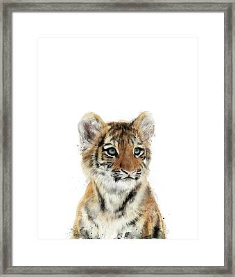 Little Tiger Framed Print by Amy Hamilton