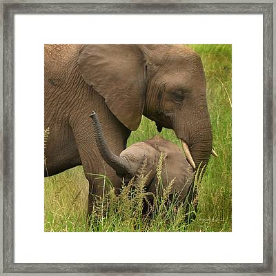 Little Toot Framed Print