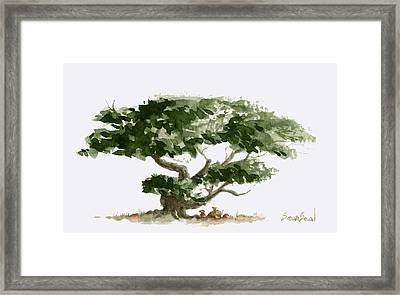 Little Tree 5 Framed Print