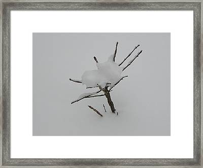 Little Tree In Winter Framed Print by Richard Mitchell