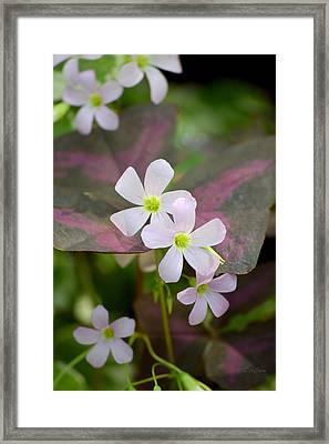 Little Twinkles Framed Print by Deborah  Crew-Johnson