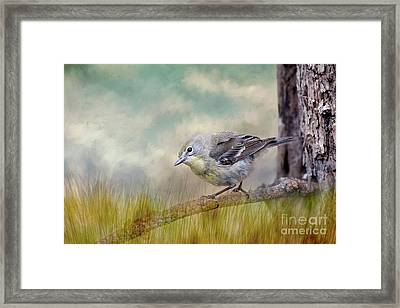 Little Warbler In Louisiana Winter Framed Print by Bonnie Barry