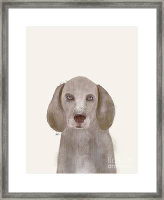 Framed Print featuring the painting little Weimaraner by Bri B