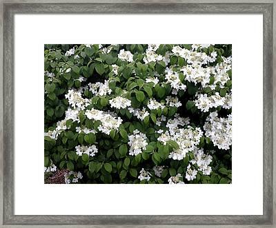 Little White Flowers Framed Print