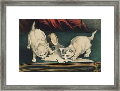 Framed Print featuring the painting Little White Kitties Into Mischief                                                      by Matthias Hauser