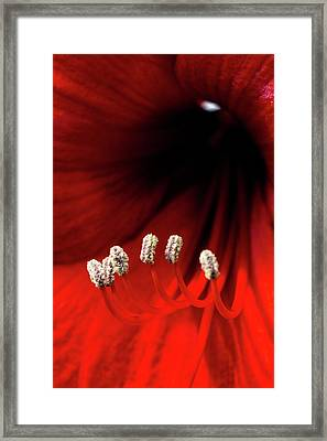 Little White Slippers And A Crimson Robe Framed Print by Mother Nature