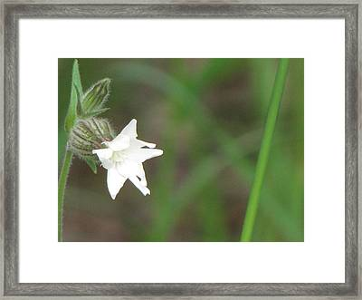 Little White Star Framed Print by Sylvia Wanty