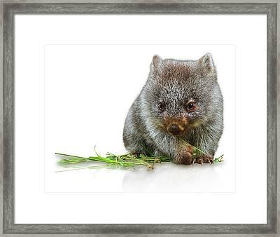 Little Wombat Framed Print