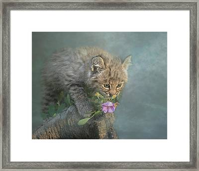 Little Wonders Framed Print