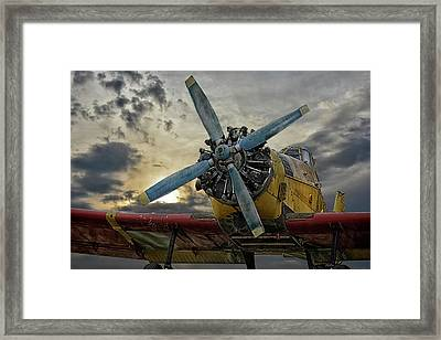 Little Yellow Bird Framed Print